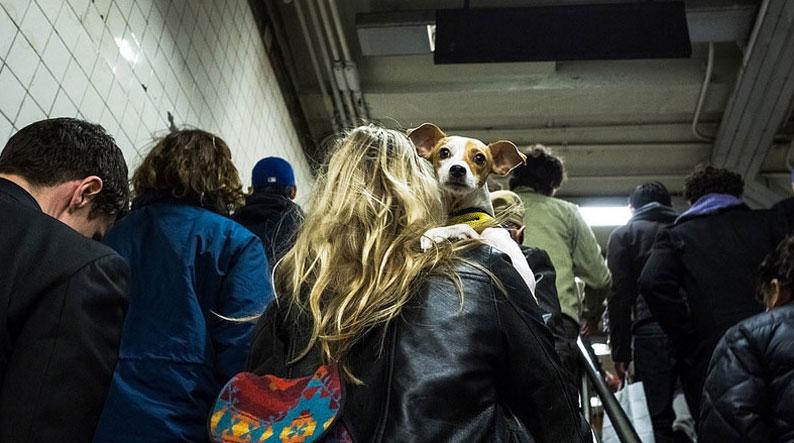 dog-in-new-york-subway]-bb