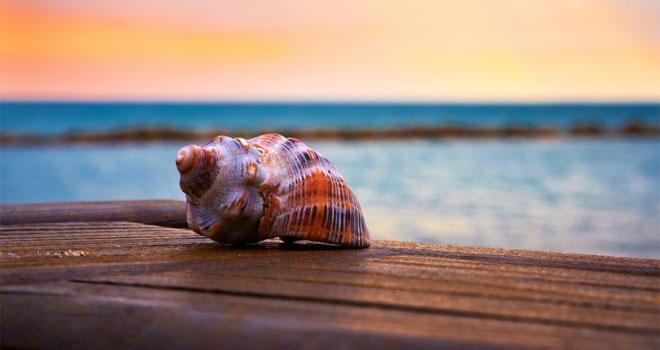 seashell-p