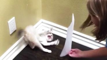 Dziewczynka pokazała małemu kotu, jak wygląda. Jego reakcja powala na kolana
