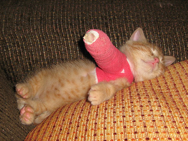 hamster-broken-arm1