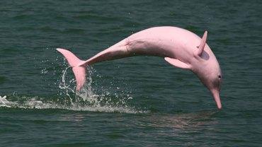 Przyroda też kocha różowy kolor. Oto zwierzęta, które dowodzą, że ta barwa pasuje nie tylko do blondynek
