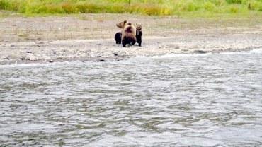 Fotograf uwiecznił chwilę porzucenia przez niedźwiedzicę młodych. Zrobiła to z myślą o ich przyszłości