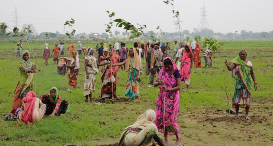 planting-trees-in-india-1