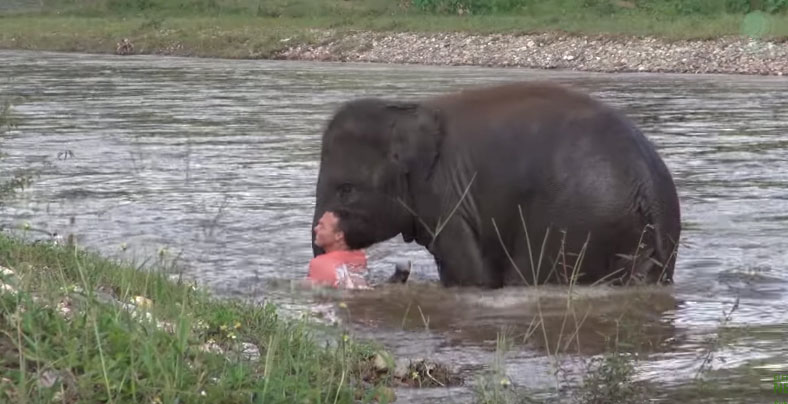 elephant-rescues-drowning-1
