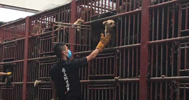 saved-from-the-slaughterhouse-dogs-5
