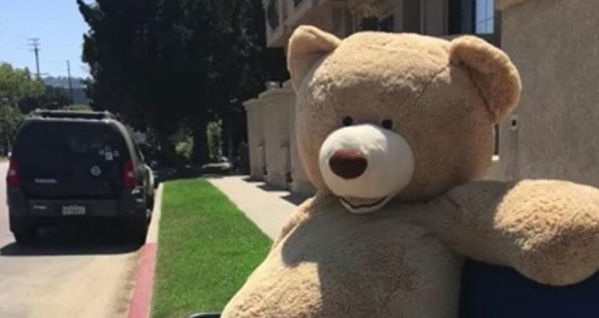 sale-teddy-bear-p