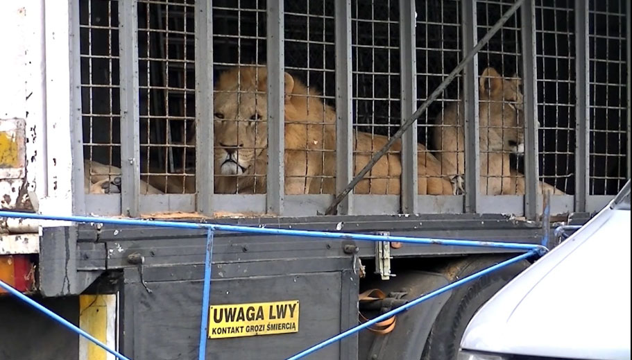 animals-in-circuses-6