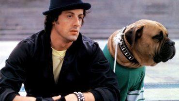 Kiedyś Stallone był tak biedny, że musiał sprzedać swojego psa za 25 $. Nie uwierzysz, co zrobił, by go odzyskać!