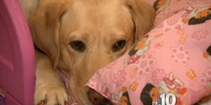 A fire started in the house of a blind woman. Then her dog did something nobody expected 3