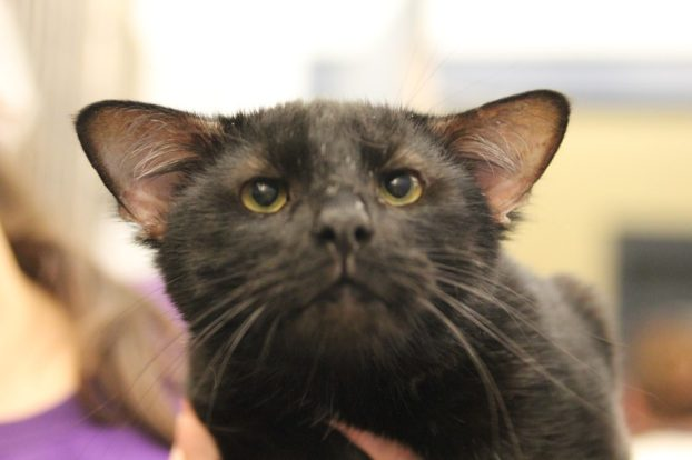 Employees of this shelter in Pittsburgh have never had an animal like this before. It's a cat named Batman, who has an extra pair of ears! 3