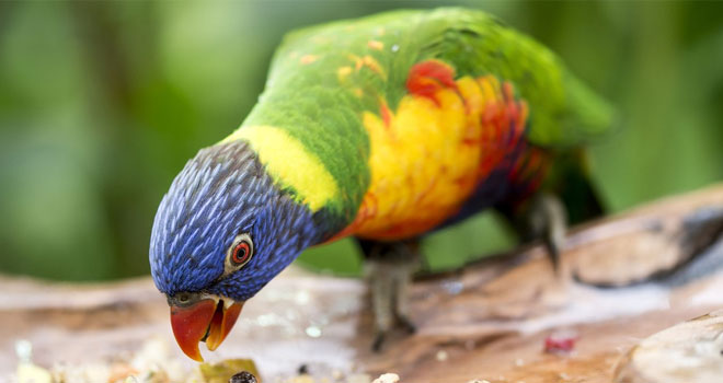"""This parrot broke the internet with its performance of the song """"Monster"""". Some even argue that it is better than Rihanna... listen to it and judge it for yourself 2"""