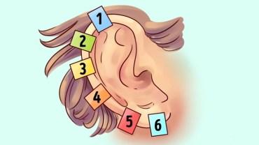 Uszy u człowieka są jak odciski palców – niepowtarzalne! A w dodatku zdradzają mnóstwo informacji o naszych genach