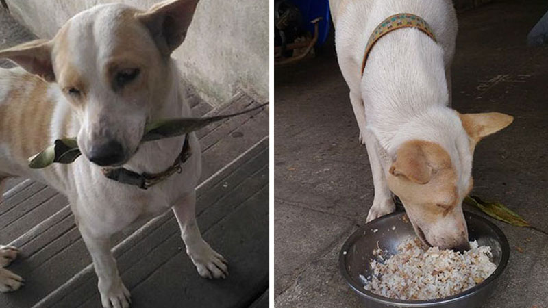 Meet Tau Plu. This stray dog knows how to thank people for food. He showers the woman feeding him with gifts. He's disarming! 2