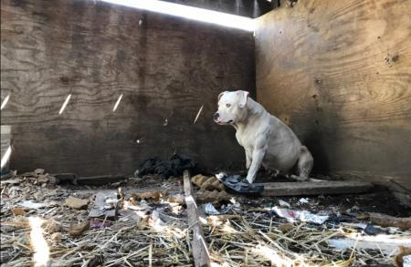 She lived in terrible conditions for 5 years, in pain and despair she bit off her paw ... 2