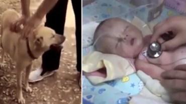 Dzięki wrażliwemu nosowi wykopał z ziemi prawdziwy skarb. Ten bohaterski pies uratował niemowlę pochowane ŻYWCEM!