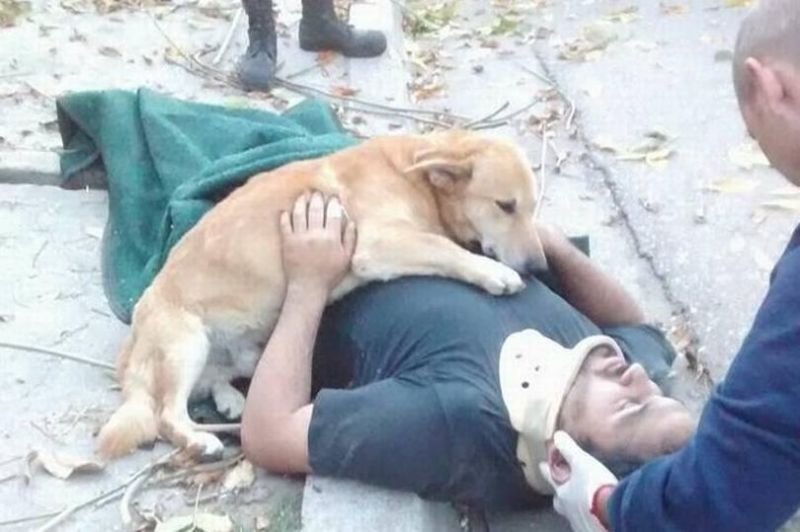 He didn't know how to help, so he did what he does best. The dog cuddled with his master after the accident until help came 4