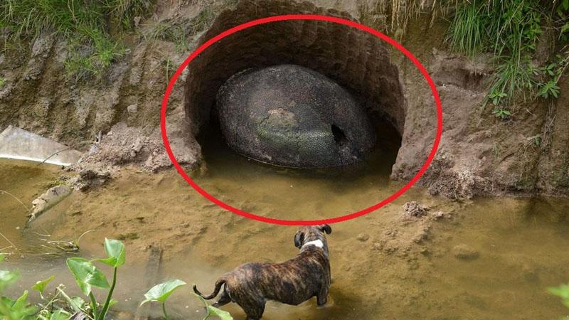 Mężczyzna natknął się na coś dziwnego nad brzegiem rzeki. To, co odkrył, zadziwiło cały świat!