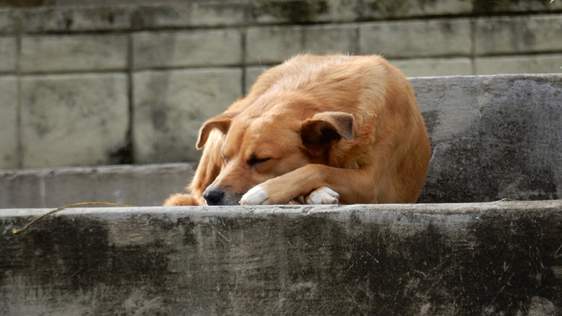 "The history of the ""saddest dog in the world"" shows that animals have feelings and that we cannot think of them as toys 3"