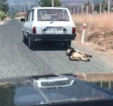 The man tied his dog to the car and pulled it for a few miles! Place of action? Turkey, where animal rights are routinely violated 4