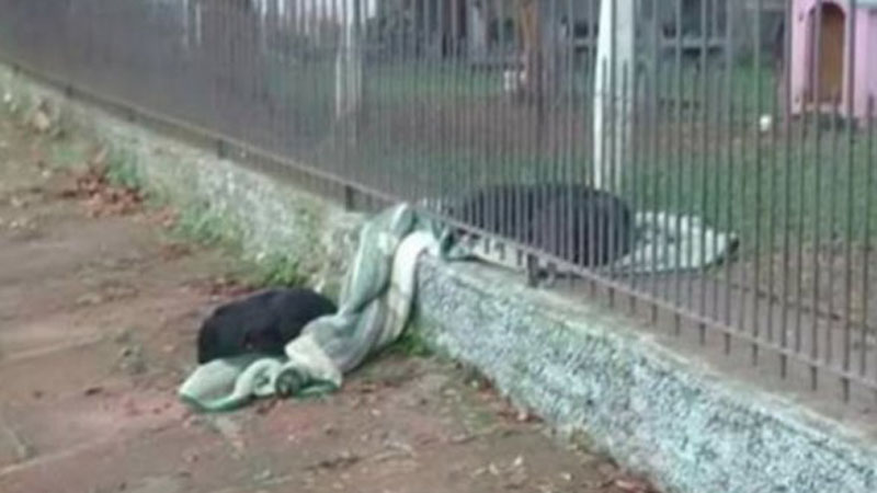 This dog pulled a blanket out from a shed and shared it with a homeless friend! This picture captures the hearts of Internet users 4