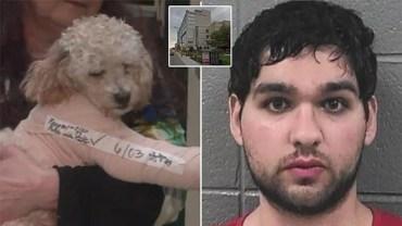 Podał się za właściciela psów, dał nawet znalazcy nagrodę za ich ocalenie. Wszystko tylko po to, żeby zrzucić zwierzęta z dachu pięciopiętrowego budynku! Co za potwór!