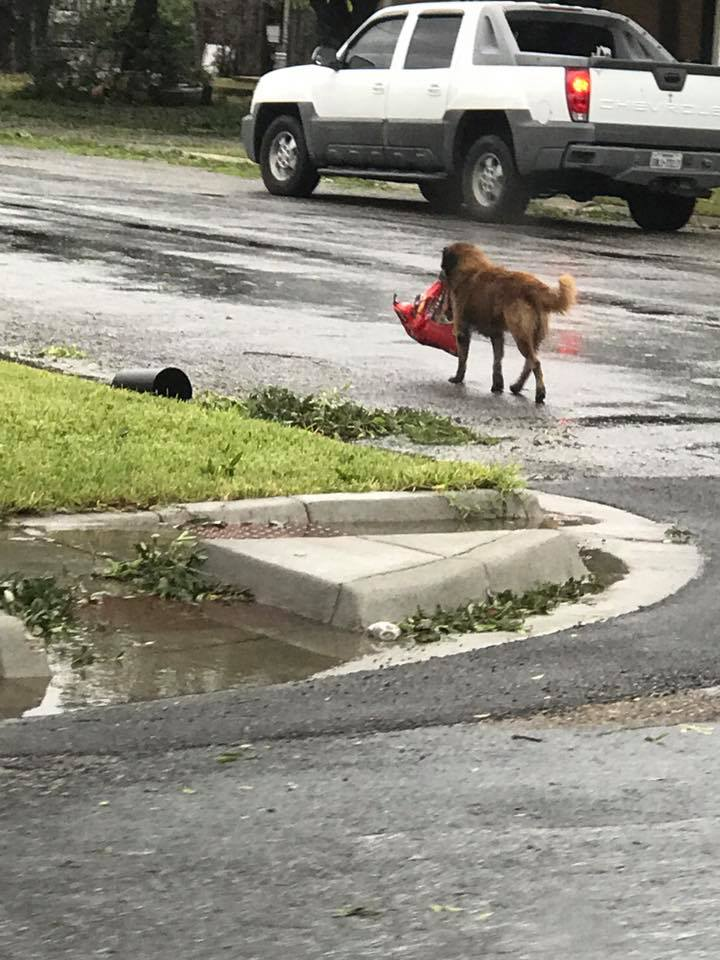 When you know what this dog carries in its mouth, you will smile widely. Internet users continue to admire its resourcefulness! 2