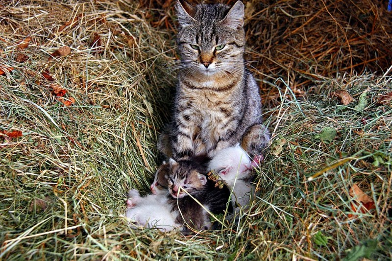 The farmer rescued 4 tiny kittens. As they started to grow, they discovered that they were not the ones for whom they were! 2