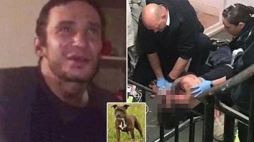 Używki zamieniły potulne zwierzę w bestię. Pies zagryzł narkomana, bo najadł się jego narkotyków!