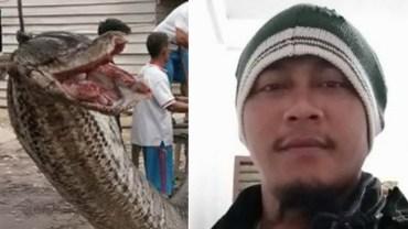 Zobaczył gigantycznego węża i postanowił go zabić. Zapasy z 7-metrowym pytonem nie mogły się dobrze skończyć
