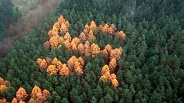 W lesie pośrodku niczego powstała ogromna swastyka z drzew. Kto i po co ją tutaj umieścił? Teorii jest co najmniej 3