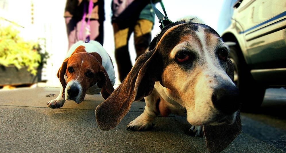 Śmierć właściciela uratowała temu psu życie. Choć opiekun nigdy nie stosował wobec niego przemocy, to zwierze było bliskie końca...