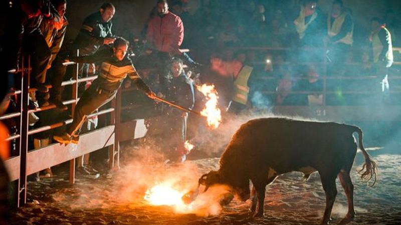 """Podpalają rogi byków i nazywają to """"sportem"""". Barbarzyńcy z hiszpańskich aren nie mają wstydu!"""
