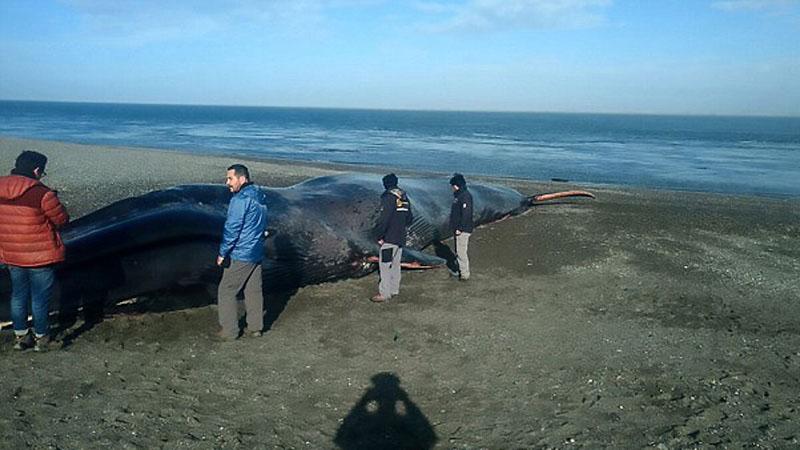 Morze wyrzuciło na brzeg ciało wieloryba. Co zrobili ludzie? Wdrapali się na nie, by zrobić sobie selfie, a na skórze zwierzęcia zostawili grafitti