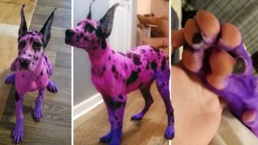 Pofarbowała psa na różowo i pomalowała mu paznokcie. Chciała, żeby wyglądał bardziej przyjaźnie