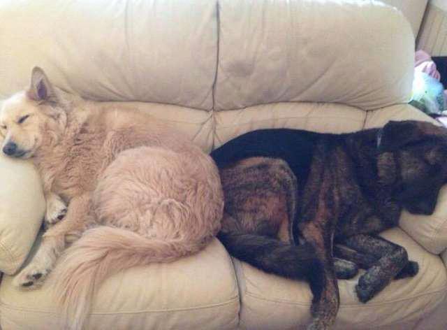 Pies w żałobie nie przestaje tulić poduszki ze zdjęciem brata. Takie obrazy rozdzierają serce