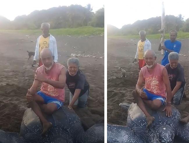 Ludzie dręczą żółwia, który próbuje złożyć jaja. Świetnie się bawili, jeżdżąc na nim i ciągnąc go za płetwy