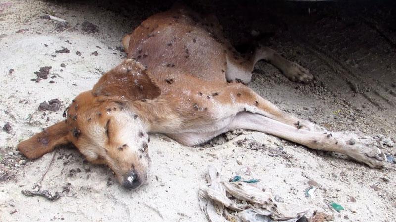 Pies umierał na ulicy. Jedni go kopali, inni omijali, nawet robactwo uznało go za martwego