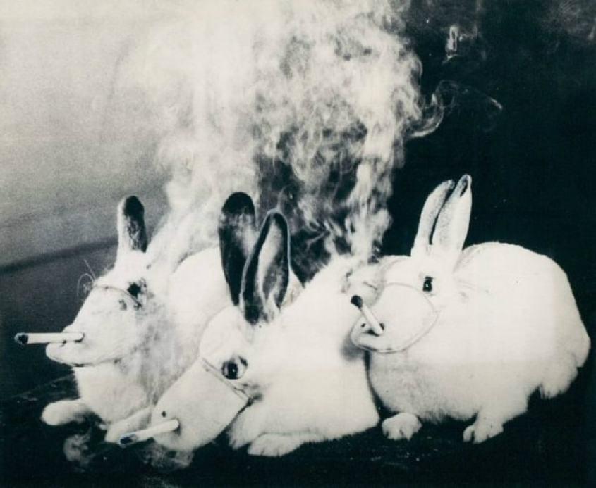 Koncerny tytoniowe testują papierosy na psach! 🚬Zwierzęta są potem zabijane i podawane sekcji zwłok