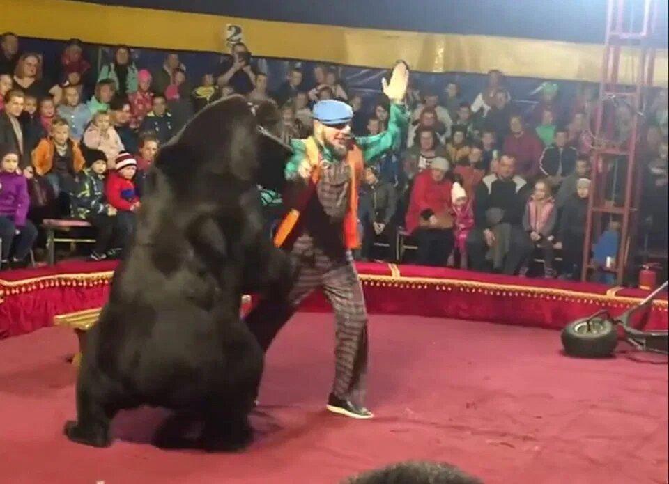 Cyrkowy niedźwiedź rzucił się na swego trenera. Dantejskie sceny rozegrały się na oczach dzieci
