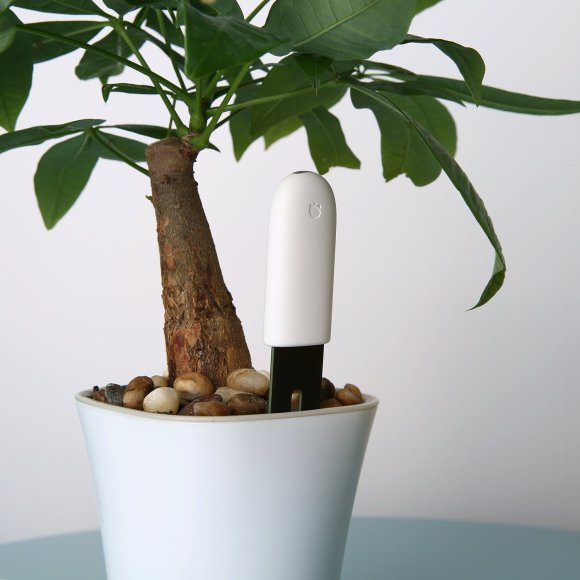 Le Flower Care inséré dans le pot d'une plante.