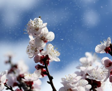 Le printemps et son renouveau sont arrivés