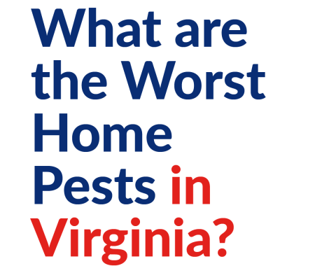 What are the Worst Home Pests in Virginia?
