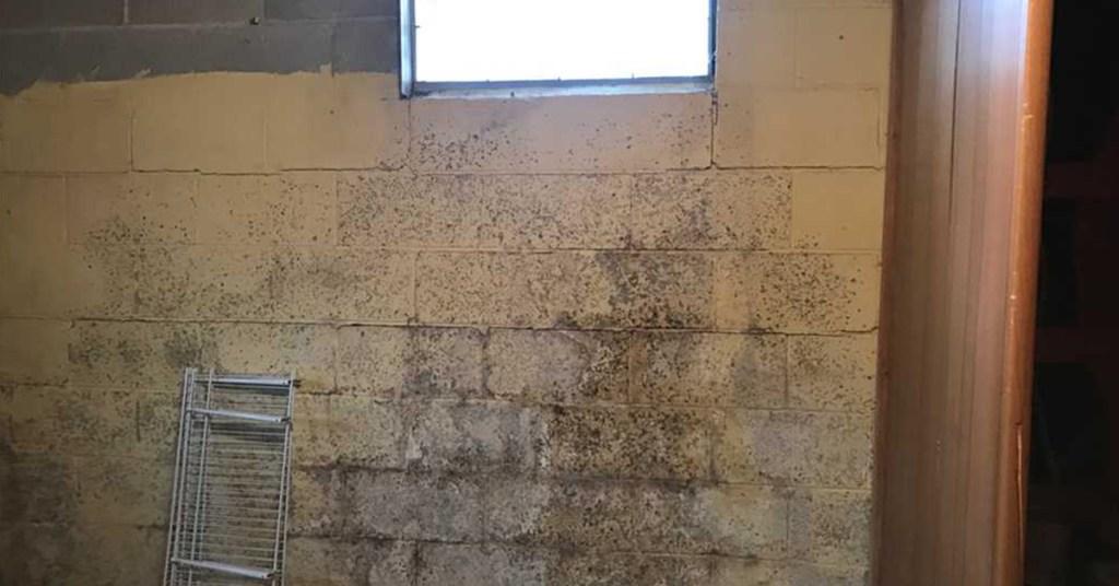 mold or bug feces