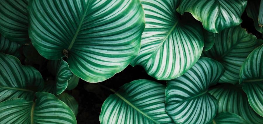 Bergamotte x Happn organisent la première vente de plantes pour célibataires.