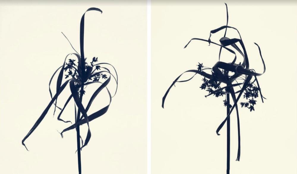 Exposition Rachel LEVY – Herbarium – Galerie GADCOLLECTIO