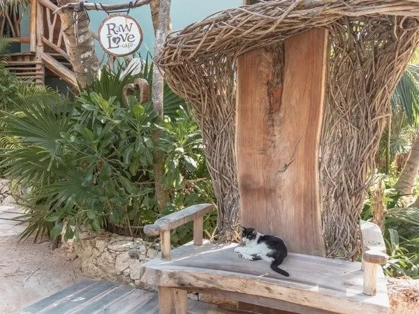 Cat siting on a wooden bench near the Raw Love sign