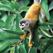 Oxygen Jungle Villas Uvita Costa Rica Jetsetter