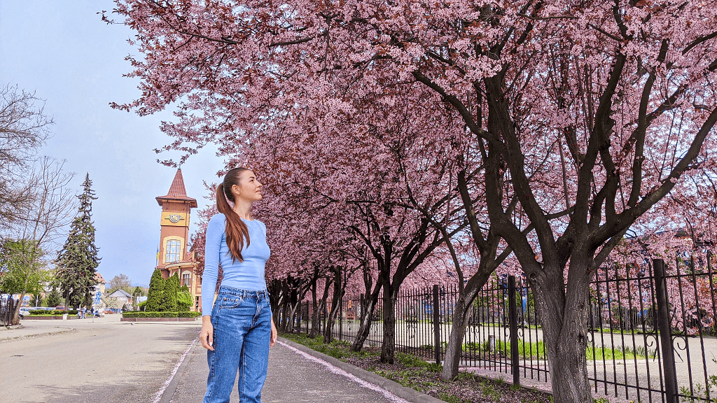 uzhhorod-cherry-blossom-festival