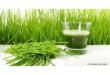 Weizengras Pulver kaufen im Test & Vergleich 2