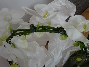 Blumenshop.de Erfahrungen 4